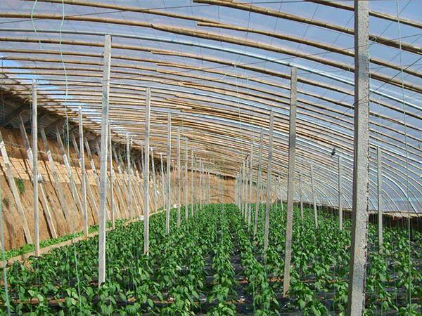 工业暖风机在温室大棚的应用